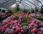 Ontario: Niagara Falls - conservatory with display of hydrangea